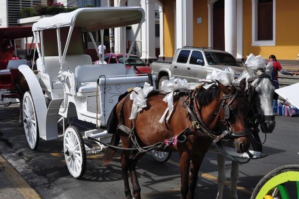 Svatební koně