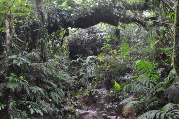 V džungli na sopku