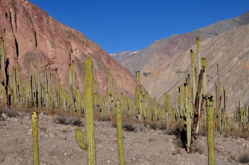 Kaktusový les