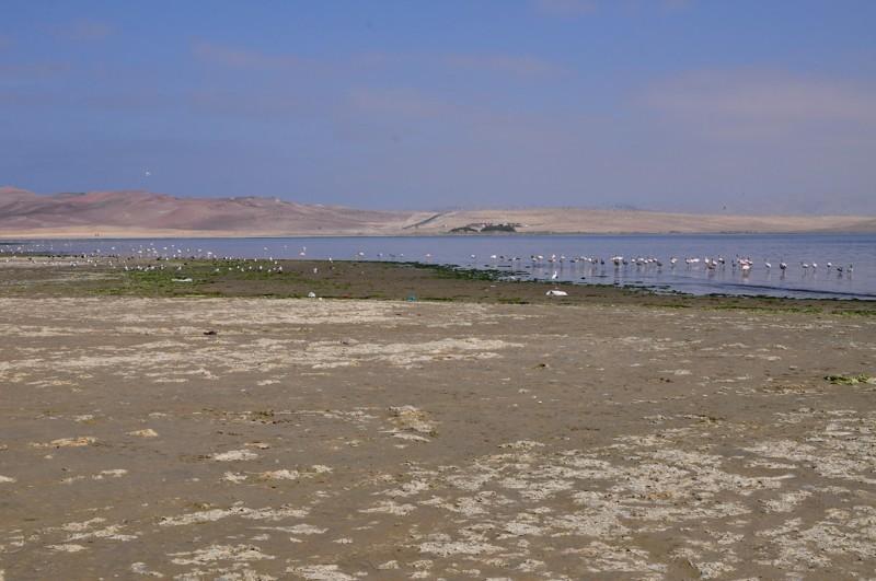 Rezervace Paracas