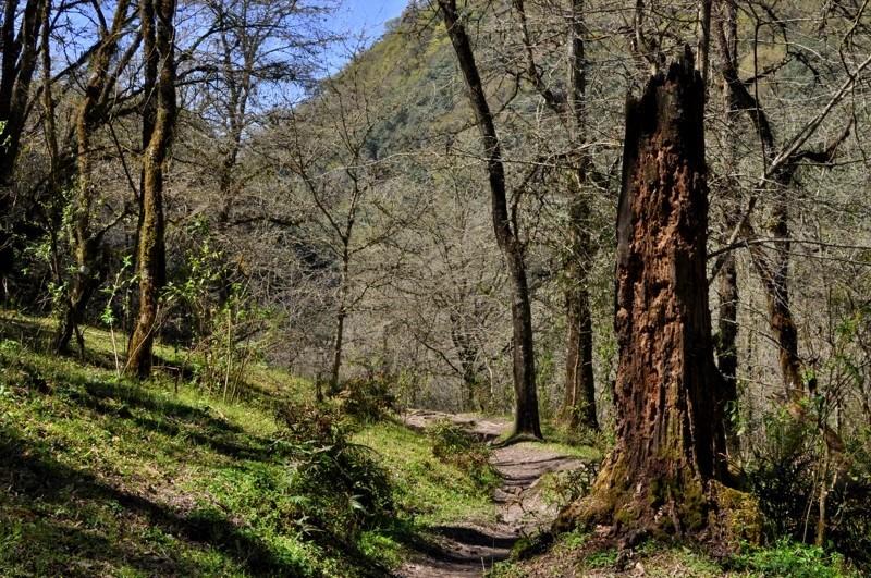 V přírodní rezervaci u San Lorenzo